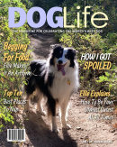 Personalized Dog Magazine Cover